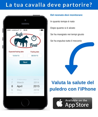 Safe Foal
