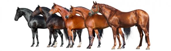 Cavalli da copertina