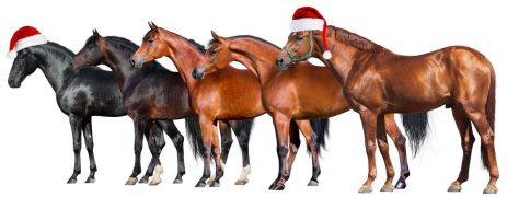Copertina cavalli Natale